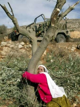 Mahfouza__odeh_olive_trees